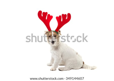 Young dog Jack Russell terrier with deer horns on his had and Christmas gifts on the white background
