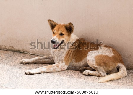 Young dog lying on the cement floor