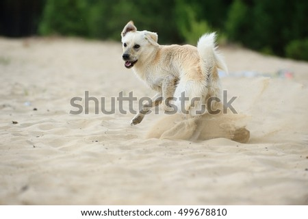 young dog playing happiness on beach in sand splash