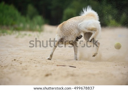 young dog playing happiness on beach with ball in sand
