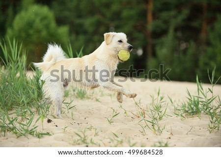 young dog playing happy on beach fetching ball