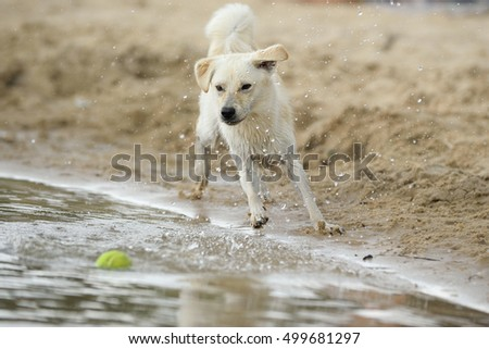 young dog playing on beach  sea splash water