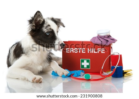 Young dog with first aid kit - stock photo