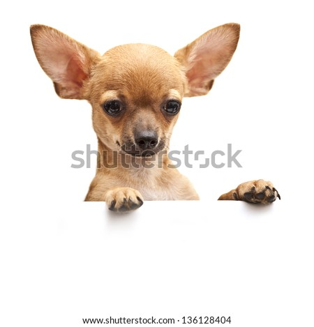 young dog with parted lips portrait close-up. - stock photo