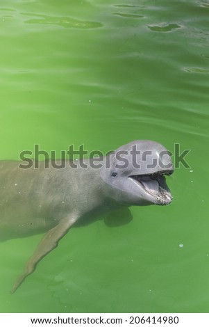 Young dolphin asking for some food. - stock photo