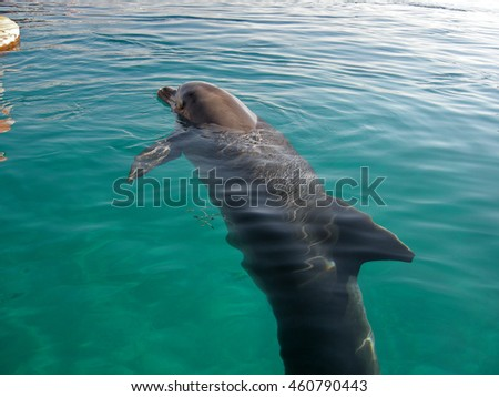 young dolphin in water