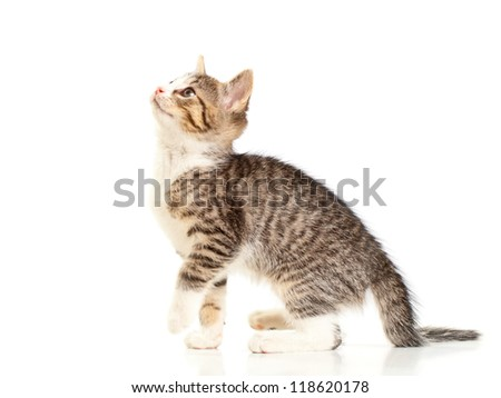 Young domestic kitten portrait over white background - stock photo