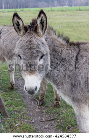 Young donkey in a meadow / donkey / donkey
