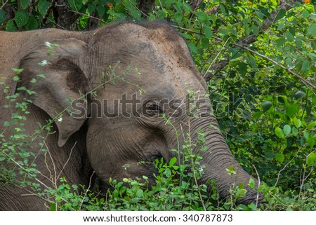 Young elephant in bushes