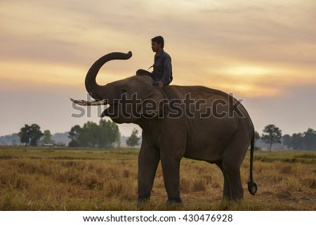 Young elephant with Man in during sunrise