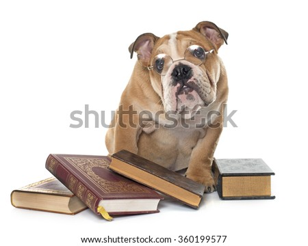 young english bulldog and books in front of white background