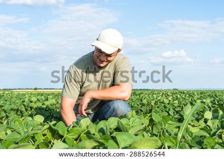 Young farmer in soybean fields  - stock photo