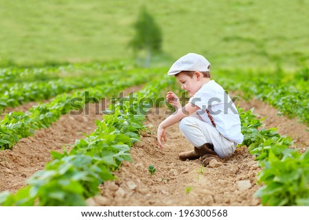 young farmer kid weeding the bean beds - stock photo