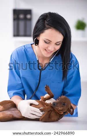 Young female doctor with a cute dog during examination by a veterinary clinic. - stock photo