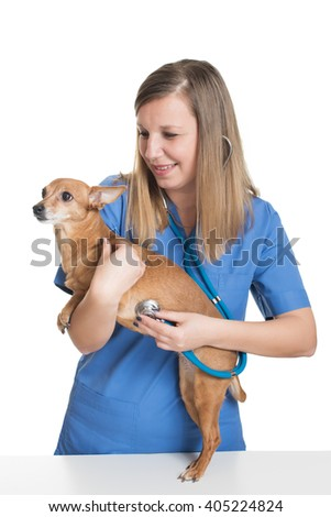 Young female vet examining dog by stethoscope - stock photo