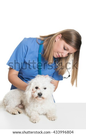 Young female veterinarian examining pet dog