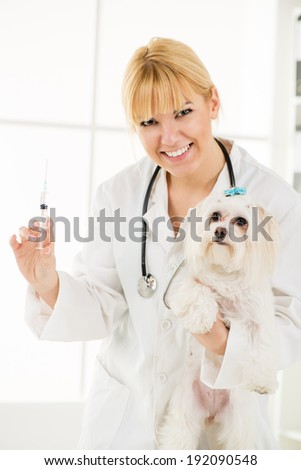 Young female veterinary vaccinating a maltese dog at the doctor's office