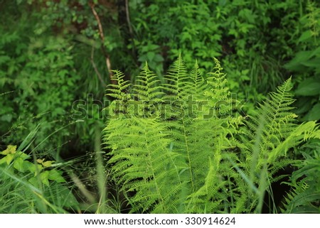 Young fern