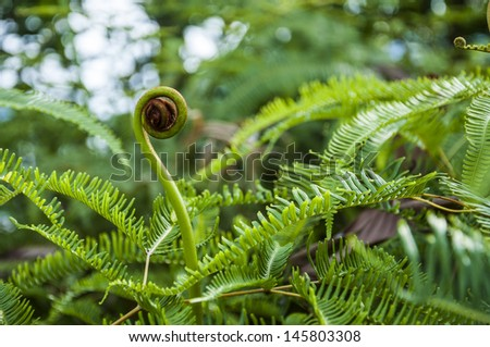 Young fern buds spirals. - stock photo