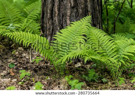 Young fern plants in the spring - stock photo