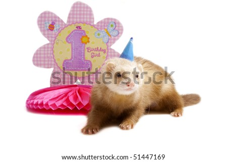 Young ferrets birthday. Isolated over white background.