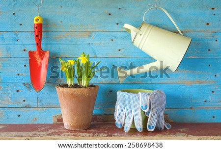 young flower with gardening tools, free copy space - stock photo