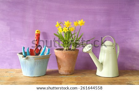 young flowers and gardening tools, spring or garden concept, free copy space - stock photo