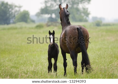 Young Foal and mother - stock photo