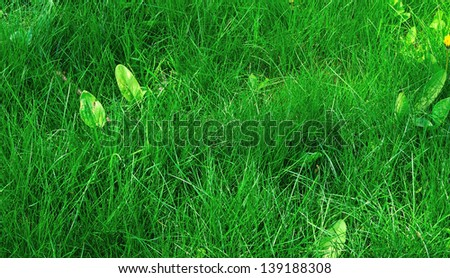 young fresh green juicy grass - stock photo