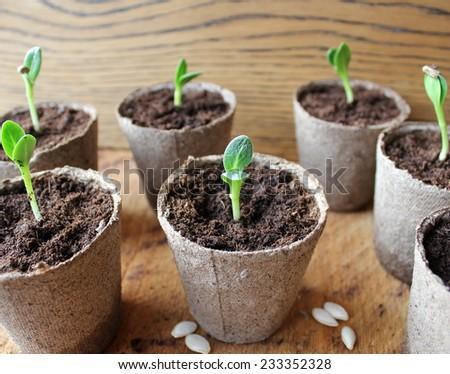 Young fresh seedling  - stock photo