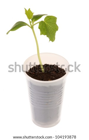 Young fresh seedling stands in plastic pots - stock photo
