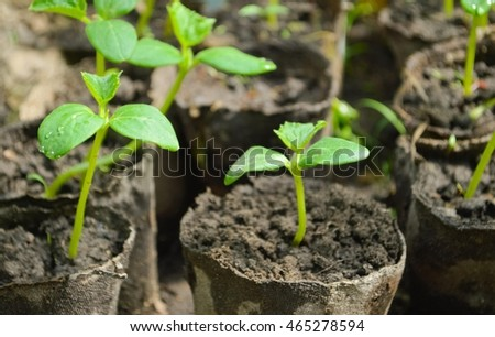 Young fresh seedling stands in pots