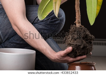 Young gardener transplanting a plant in fertile soil and new big flowerpot