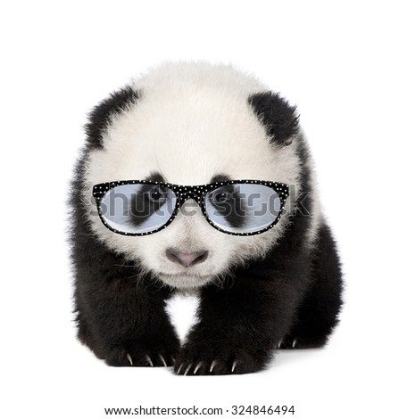 Young Giant Panda wearing glasses in front of a white background - stock photo