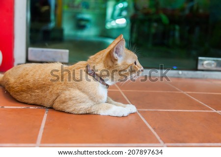 Young ginger cat - stock photo