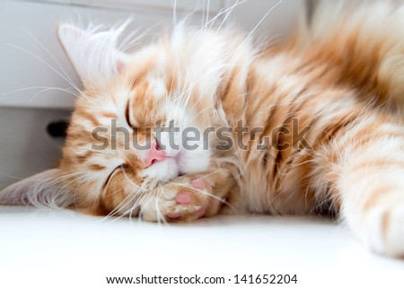 young ginger stripped siberian cat sleeping with eyes closed - stock photo