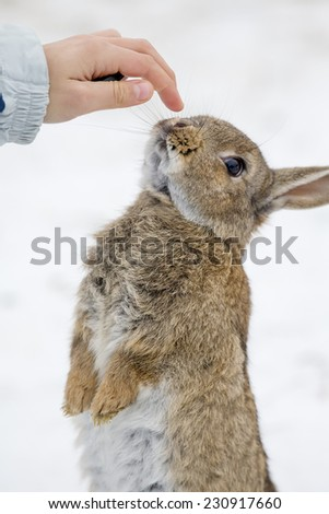 Young girl and cute hare outdoor in the snow - stock photo
