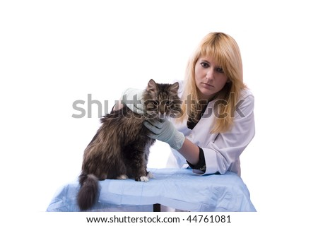 Young girl bringing cat for examination by vet. Pretty Veterinarian and feline subject.  Veterinarian have a  medical examination a cat. White background.