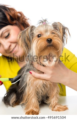 young girl brushing her pet thick hair a brush