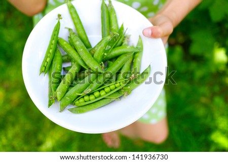 Young girl hand holding organic green natural healthy food produce green Peas in the plate - stock photo