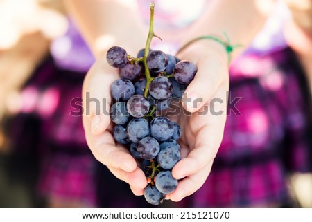 Young girl holding ripe organic grapes. Harvest, fall, country living, and vineyard concept.  - stock photo