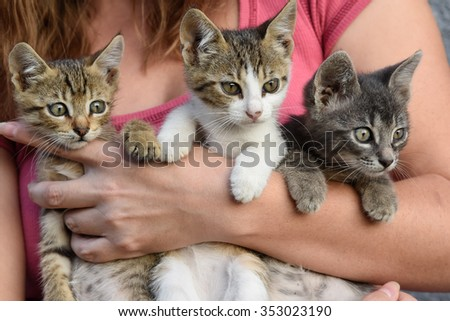 young girl holding three beautiful kittens outdoor adoption concept  - stock photo