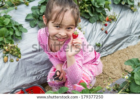 Young girl picking holding a strawberry she just picked from patch - stock photo