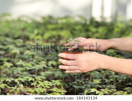 Young girl's hand holding a flowerpot with small seedling