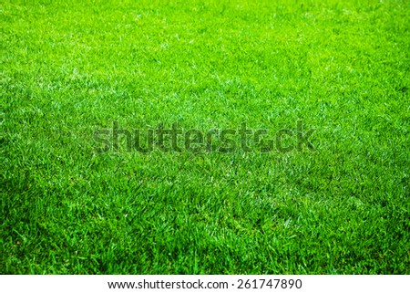Young grass or lawn, shallow depth of field. - stock photo