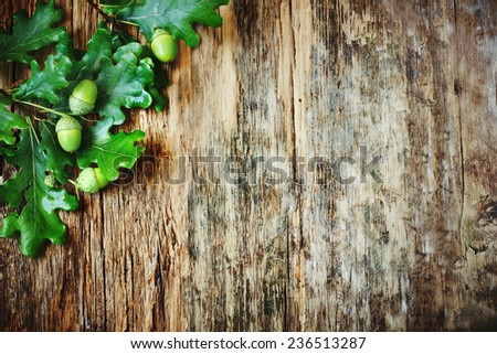 young green acorns on the old wooden background .backgrounds and nature. copy space background