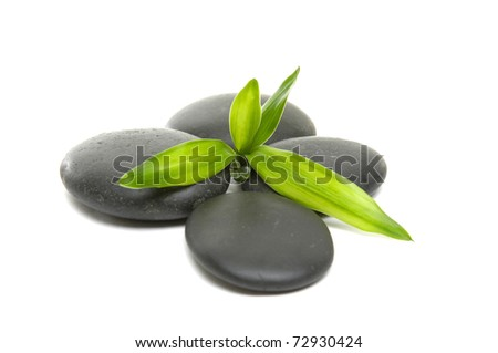 young green bamboo leaf and stones