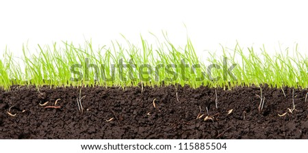 Young, green grass in cross-section in the soil. - stock photo
