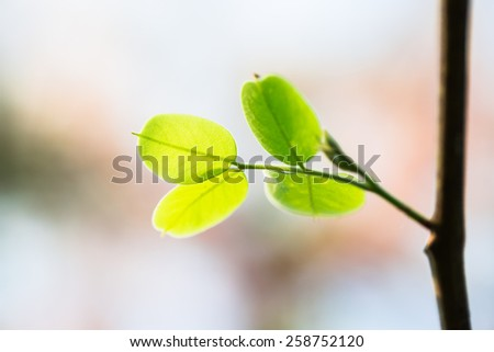 Young green leaf against sunlight - stock photo