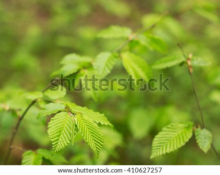 Young green leaves in the forest